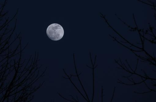 birds and moon 2012 188 (2)
