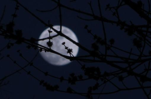 birds and moon 2012 193 (3)